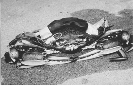 http://www.mediwriter.com/crab_photo.jpg